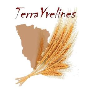 Ass_ter_Logo terrayvelines